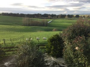 Looking out my bedroom window Does it get any more pastoral than this Hamilton New Zealand photo 11 July 2017 by Brian Lloyd CC BY